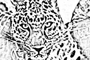 lepardo para colorear