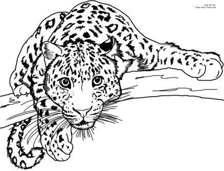 leopardo para niños